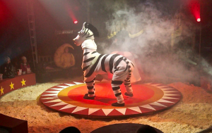 The only 'animal' in this circus is Zelda the cloth zebra!