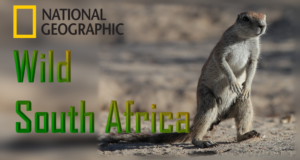 Wild South Africa