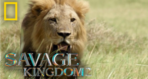 Savage Kingdom 2