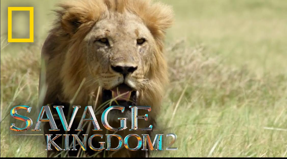 Savage Kingdom 2
