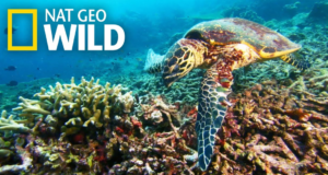 World Ocean Day on Nat Geo Wild