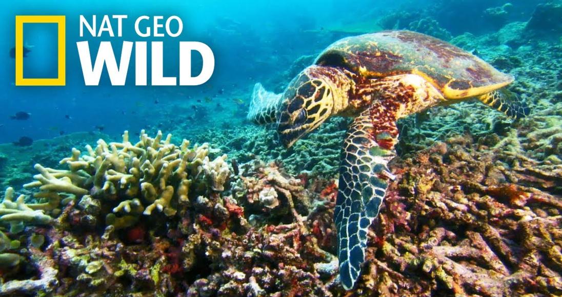 World Ocean Day on Nat Geo Wild