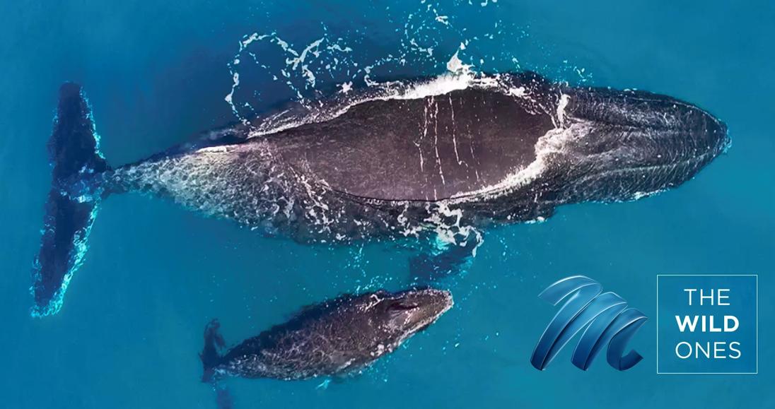The Wild Ones: Aquatic Life