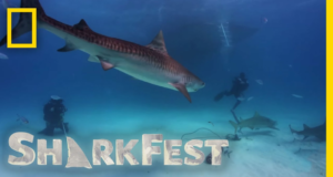 SharkFest on Nat Geo Wild
