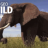 World Elephant Day – Nat Geo Wild