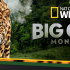 Big Cat Month 2020